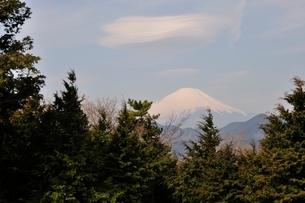 菜の花台より富士山の写真素材 [FYI02810038]