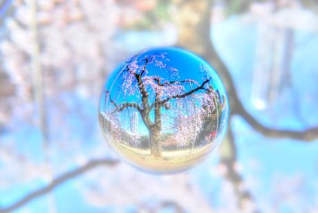 SAKURA Crystalの写真素材 [FYI02810063]