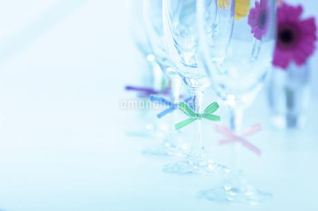 4つ並んだシャンパングラスとマーガレットの写真素材 [FYI02811085]