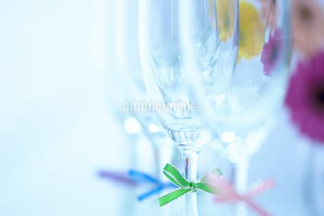 4つ並んだシャンパングラスとマーガレットの写真素材 [FYI02811098]