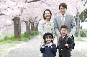桜と笑顔の4人家族の写真素材 [FYI02811883]