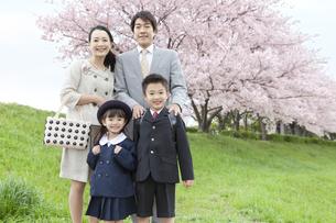 桜と笑顔の4人家族の写真素材 [FYI02811897]