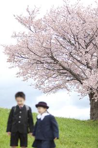 桜と子供たちの写真素材 [FYI02811901]