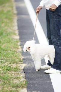 犬と散歩している男性の足元の写真素材 [FYI02812135]