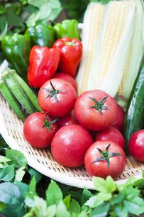 夏野菜の写真素材 [FYI02812481]