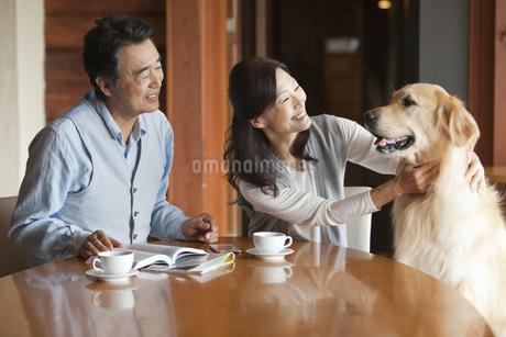 犬をあやす中高年夫婦の写真素材 [FYI02813338]
