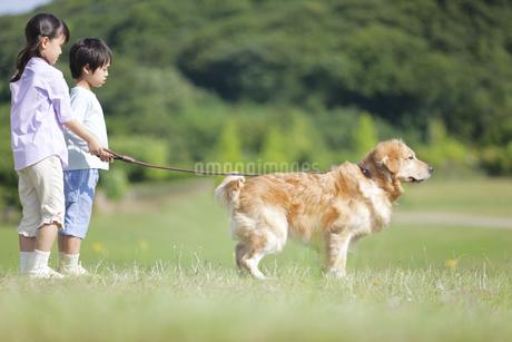 犬の散歩をする女の子と男の子の写真素材 [FYI02814209]