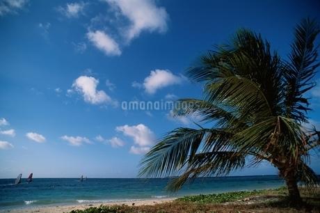 ヤシの木 空 海の写真素材 [FYI02814560]