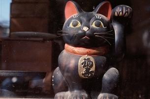 招き猫 黒の写真素材 [FYI02814762]