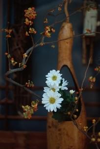 花 白 オレンジ 花活けの写真素材 [FYI02815152]