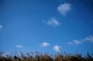 空 植物の写真素材 [FYI02815228]