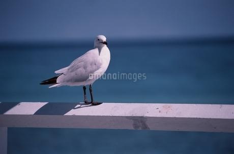 鳥の写真素材 [FYI02815234]
