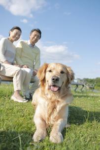 犬とベンチに座る中高年夫婦の写真素材 [FYI02815773]