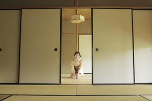 畳に座る着物姿の女性の写真素材 [FYI02815964]