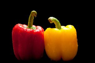 赤と黄色のパプリカの写真素材 [FYI02816176]