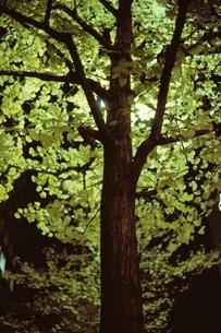 花・植物 木の写真素材 [FYI02816194]