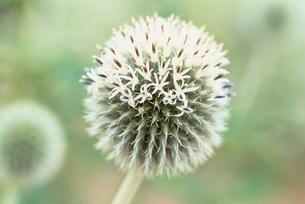 花のイメージの写真素材 [FYI02816444]