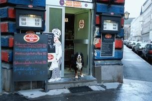 店の入り口と犬の写真素材 [FYI02816460]