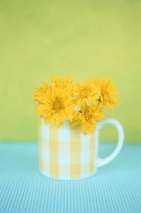 カップに生けた花の写真素材 [FYI02816487]