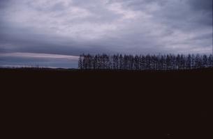 大地と雲と林の写真素材 [FYI02816527]
