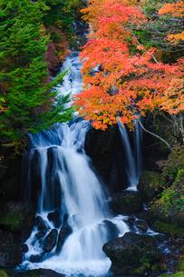 紅葉するモミジと竜頭ノ滝の写真素材 [FYI02816573]