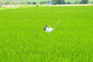 田んぼに立つタイヤでできている鶴の写真素材 [FYI02816732]