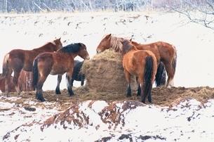冬の馬の写真素材 [FYI02816735]