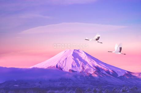 朝の富士山とタンチョウヅルの写真素材 [FYI02816820]