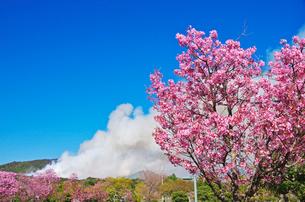 鏡野公園の桜と山火事の写真素材 [FYI02816830]