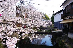 城崎温泉の桜と大谿川の写真素材 [FYI02816975]