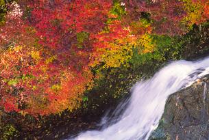 紅葉の竜頭ノ滝の写真素材 [FYI02817078]