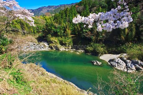 吉野川と桜の写真素材 [FYI02817139]