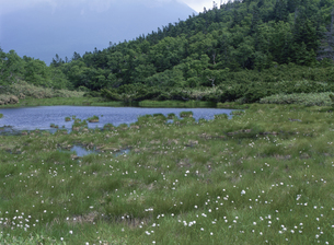 羅臼湖の写真素材 [FYI02817161]