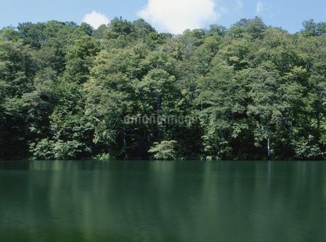 新緑の沼と青空の写真素材 [FYI02817343]