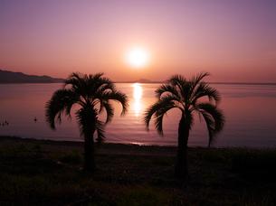 浜名湖の日の出とヤシの木の写真素材 [FYI02817661]