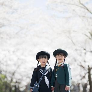 桜並木で手をつないで笑う2人の幼稚園児の写真素材 [FYI02817958]