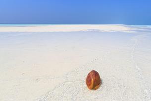 モルディブのサンドバンク(砂洲)とヤシの実の写真素材 [FYI02818191]