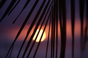 夕日とヤシの葉の写真素材 [FYI02818285]