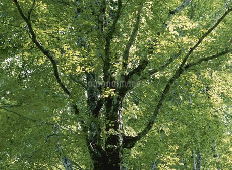 新緑の写真素材 [FYI02818436]