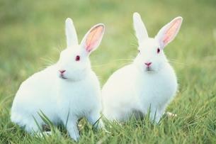 ウサギの写真素材 [FYI02818667]