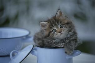 雑種の子猫の写真素材 [FYI02818682]