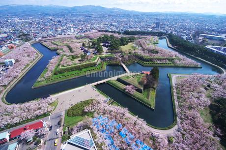 五稜郭公園と桜の写真素材 [FYI02818683]