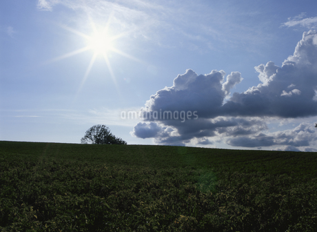 美瑛の丘と太陽の写真素材 [FYI02818694]