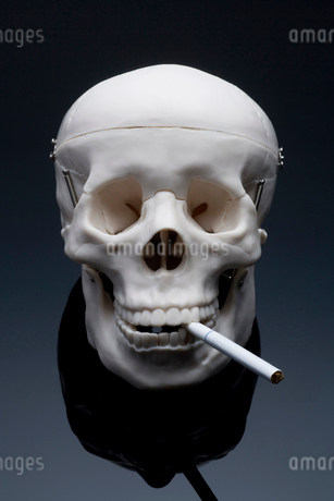 タバコの写真素材 [FYI02820543]