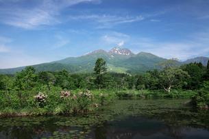 新緑のいもり池と妙高山の写真素材 [FYI02821742]