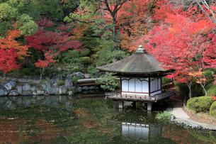 和歌山城の紅葉渓庭園の写真素材 [FYI02821932]