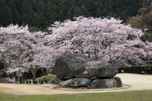 桜咲く石舞台古墳の写真素材 [FYI02821970]