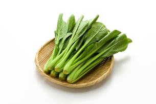 小松菜の写真素材 [FYI02822025]