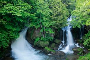 新緑の竜頭ノ滝の写真素材 [FYI02822092]