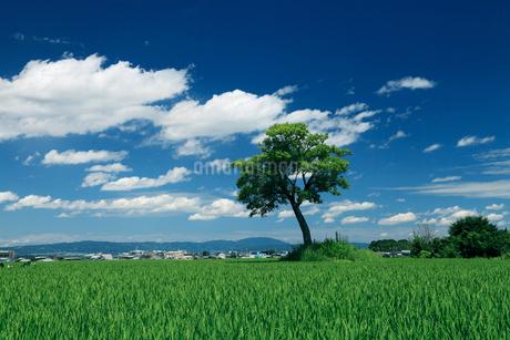 小墾田宮跡の一本の木の写真素材 [FYI02822098]
